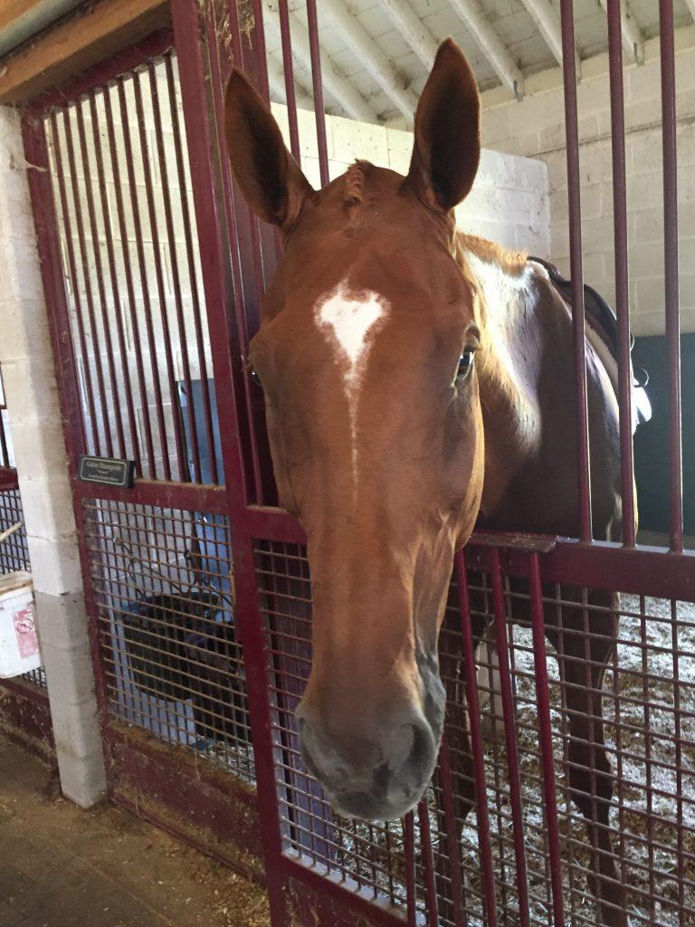 Handsome braided pony